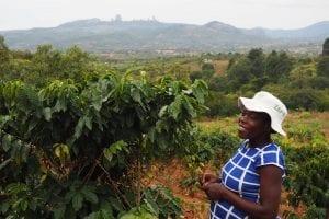 Smallholder coffee farmer in Zimbabwe